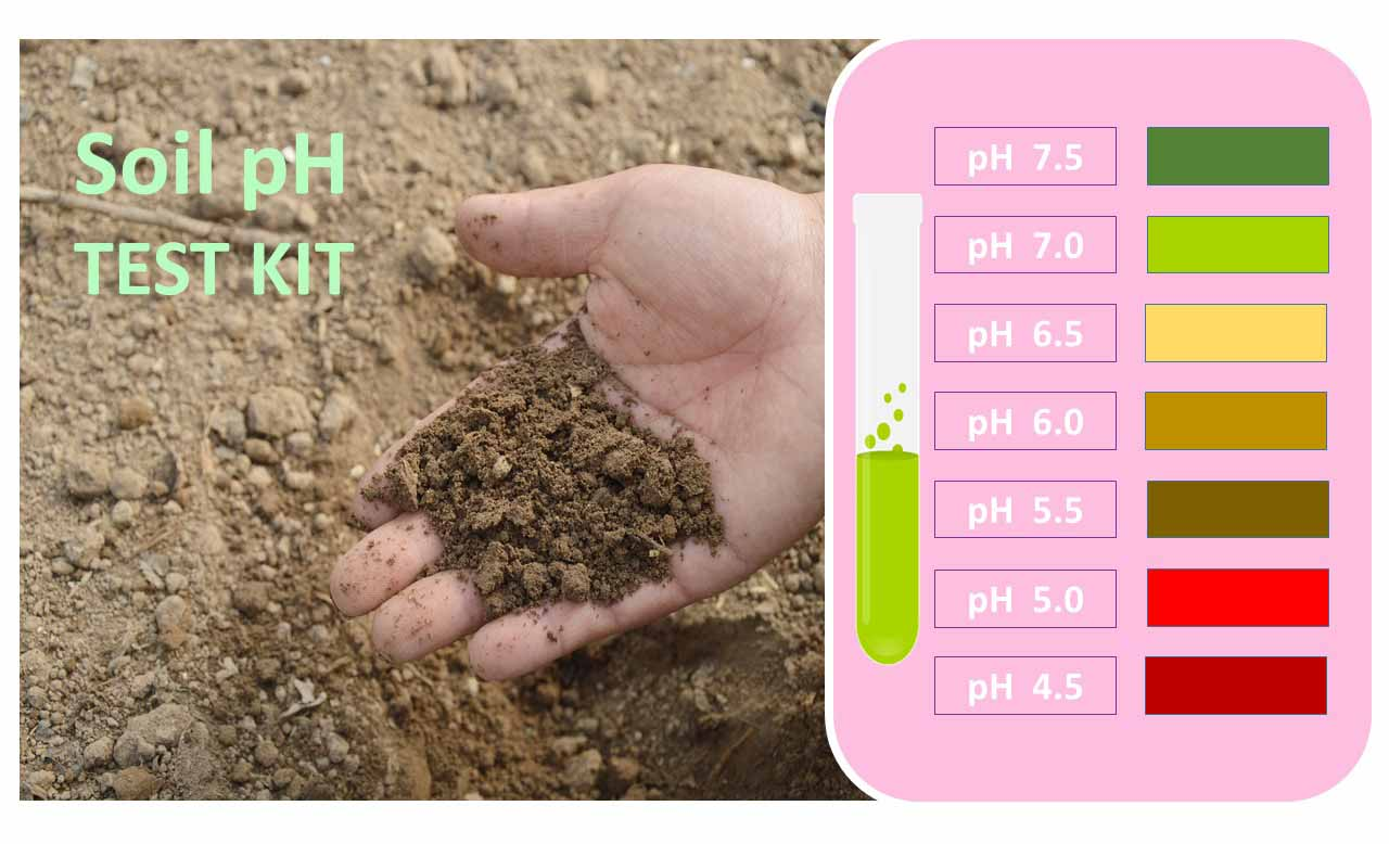 Soil pH test kit, How To Fertilize Tomatoes
