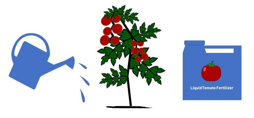 Liquid Tomato Fertilizer