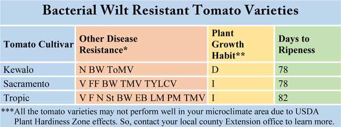 Bacterial Wilt Resistant Tomato Varieties