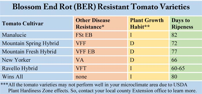 Blossom End Rot (BER) Resistant Tomato Varieties