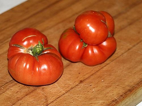 catfacing tomatoes