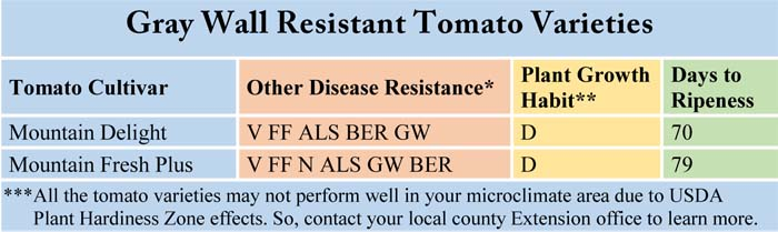 Gray Wall Resistant Tomato Varieties