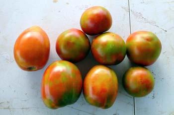 Gray wall on tomatoes, blotchy ripening