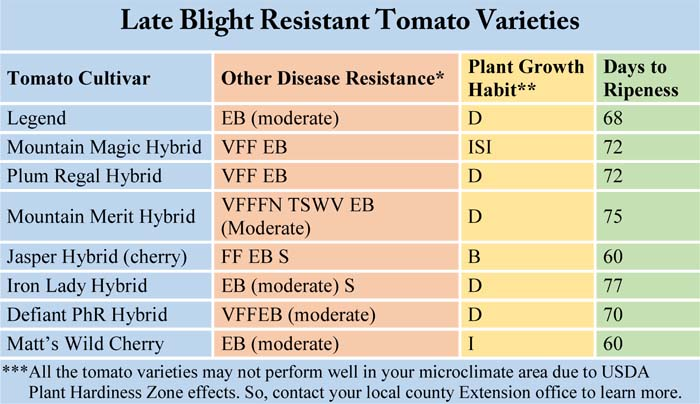 Late Blight Resistant Tomato Varieties