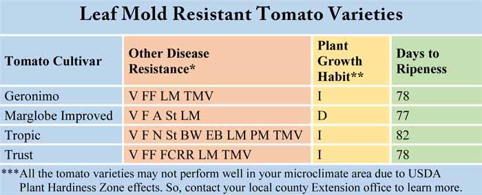 Leaf Mold Resistant Tomato Varieties