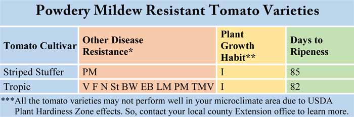 Powdery Mildew Resistant Tomato Varieties
