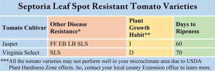 Septoria Leaf Spot Resistant Tomato Varieties