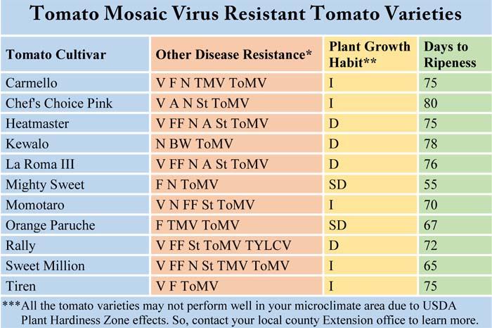 Tomato Mosaic Virus Resistant Varieties, ToMV, TMV