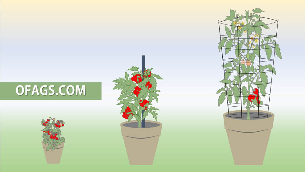 what size pot for tomatoes