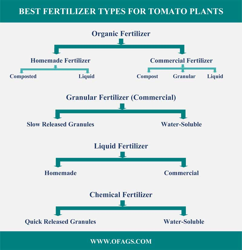 BEST FERTILIZER TYPES FOR TOMATO PLANTS